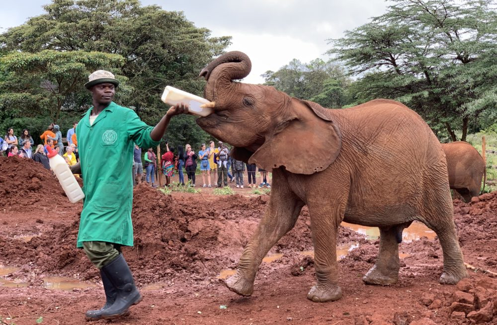 DSWT David Sheldrick Wildlife Trust. Photo by Young Lee