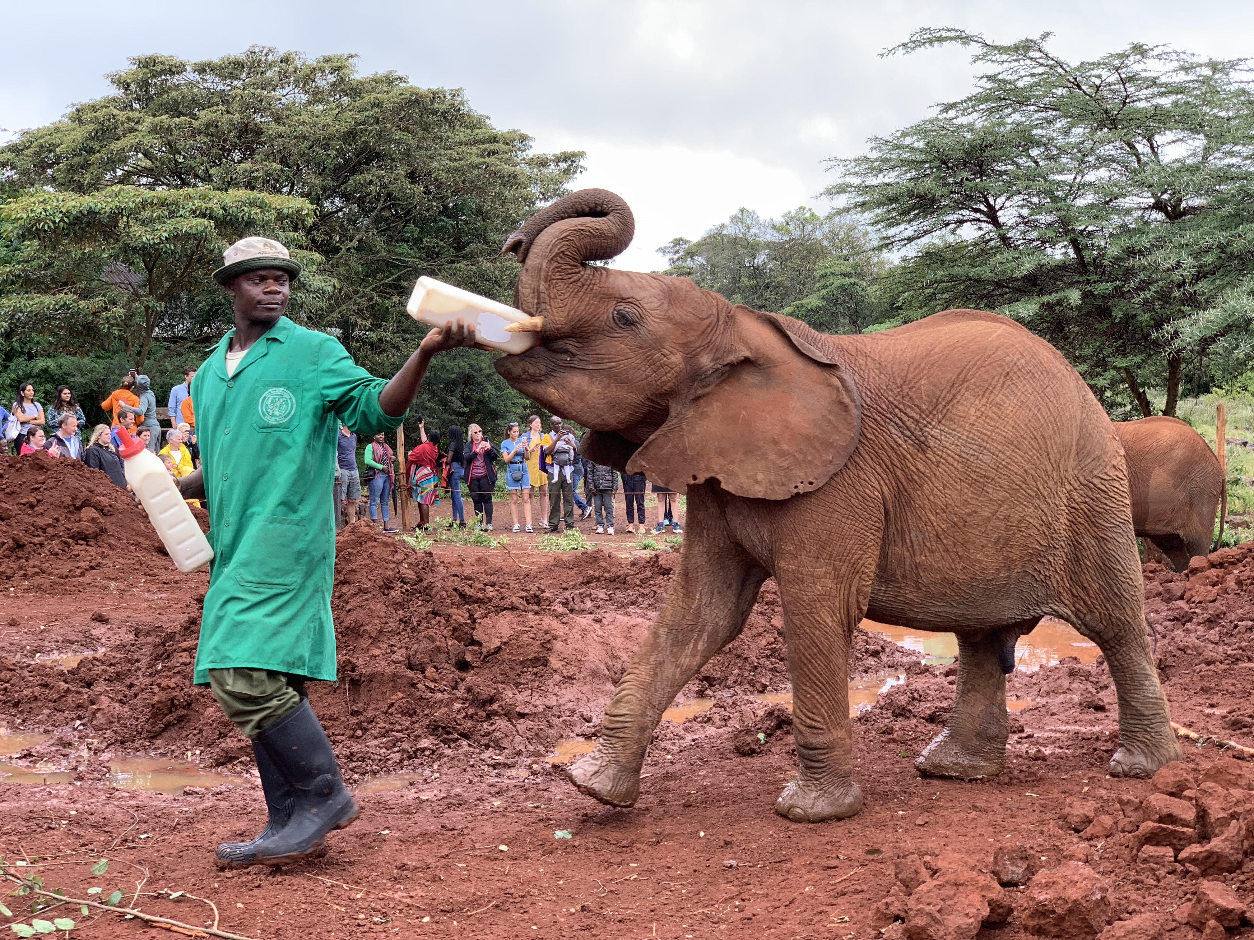 A Day at the David Sheldrick Elephant and Rhino Orphanage in Kenya