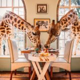Giraffe Manor via artsytecture.com. ultimate Nairobi City Guide Part 1 by Young Lee @nakslee